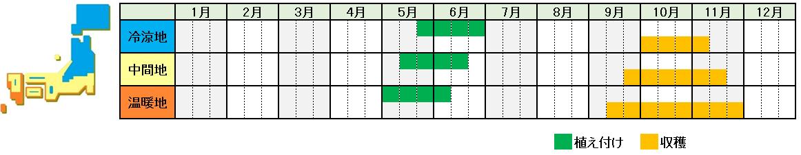 サツマイモ栽培時期横