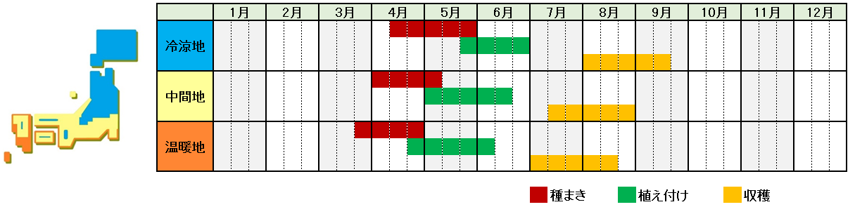 メロン栽培時期横