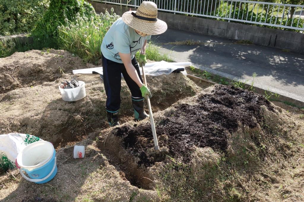大根栽培の元肥投入