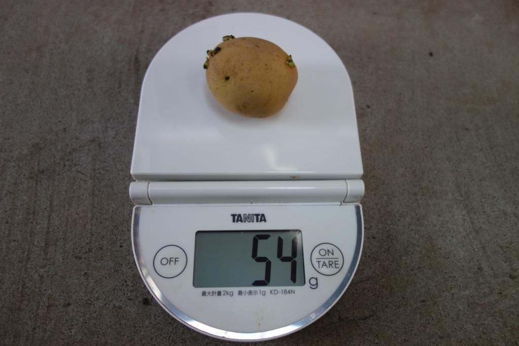 小さな種芋