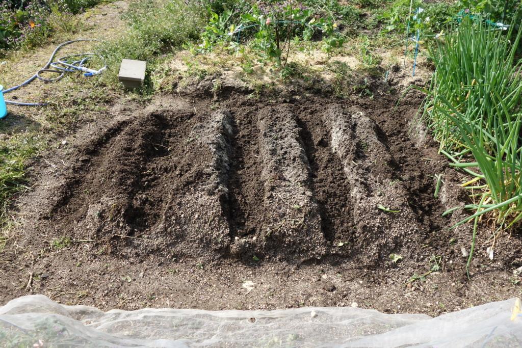植え付け覆土完了