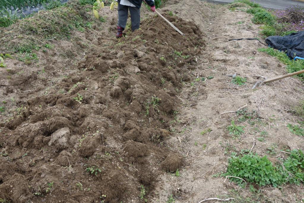 ジャガイモ栽培の土作り