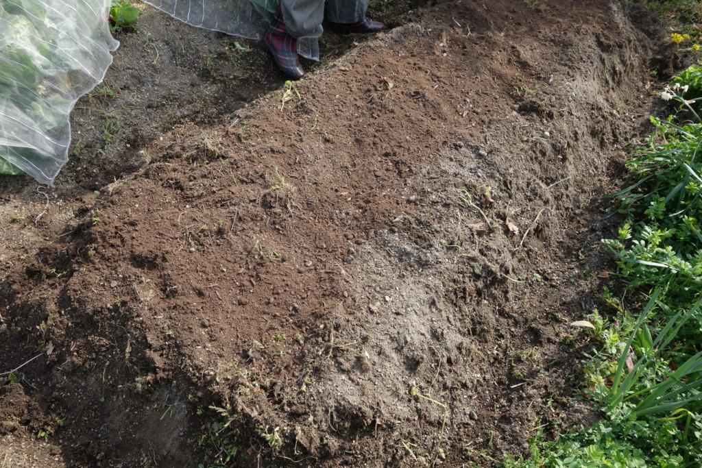 種芋の畝づくり