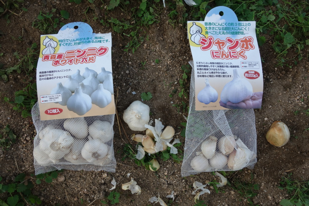 にんにくの種球