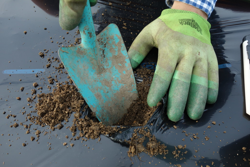 ナスの植え付けにポット大の植穴を掘っている