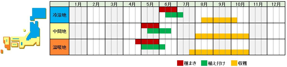 四角豆(シカクマメ)栽培時期横