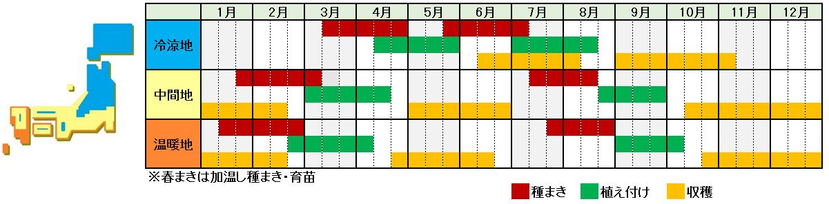 ブロッコリー栽培時期横
