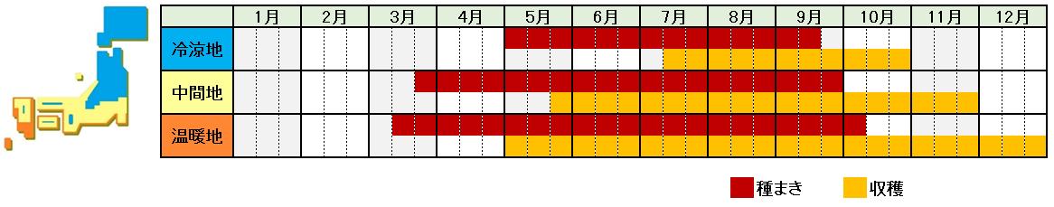 三つ葉栽培時期横