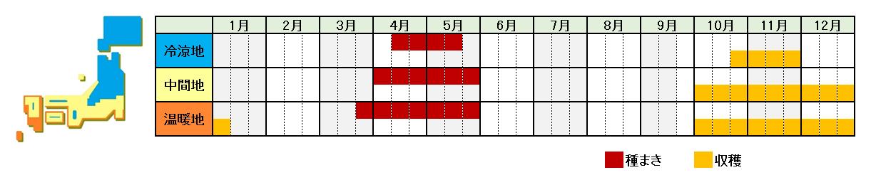 山芋の栽培時期