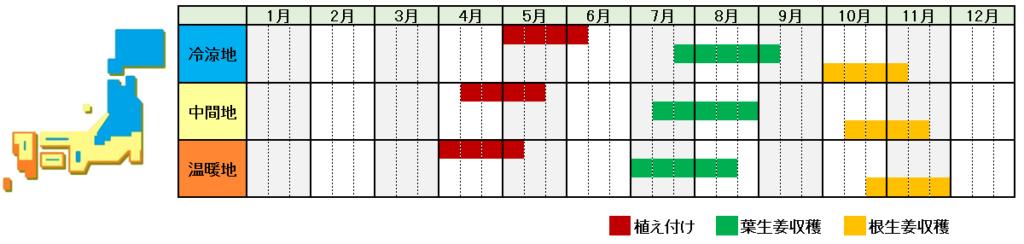 生姜栽培時期横