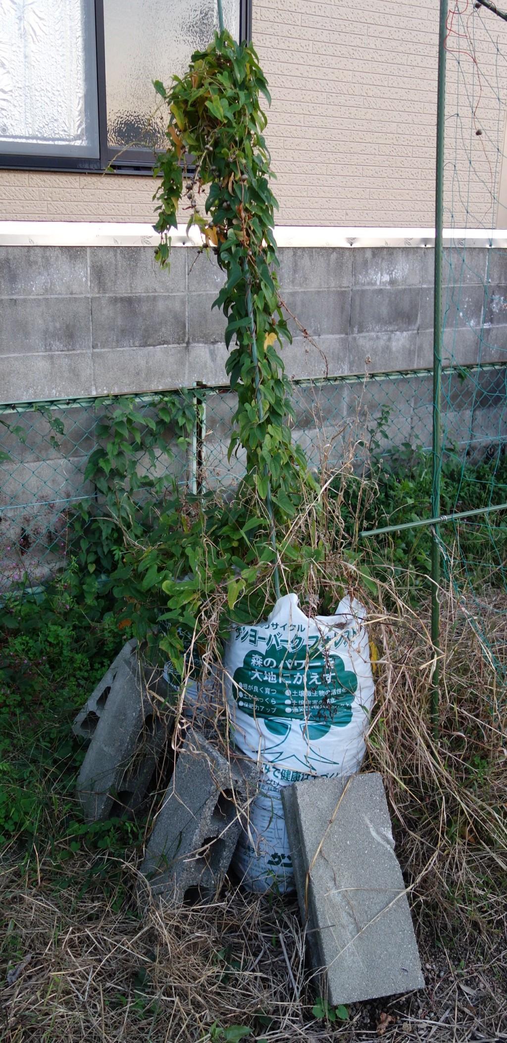 袋栽培の支柱
