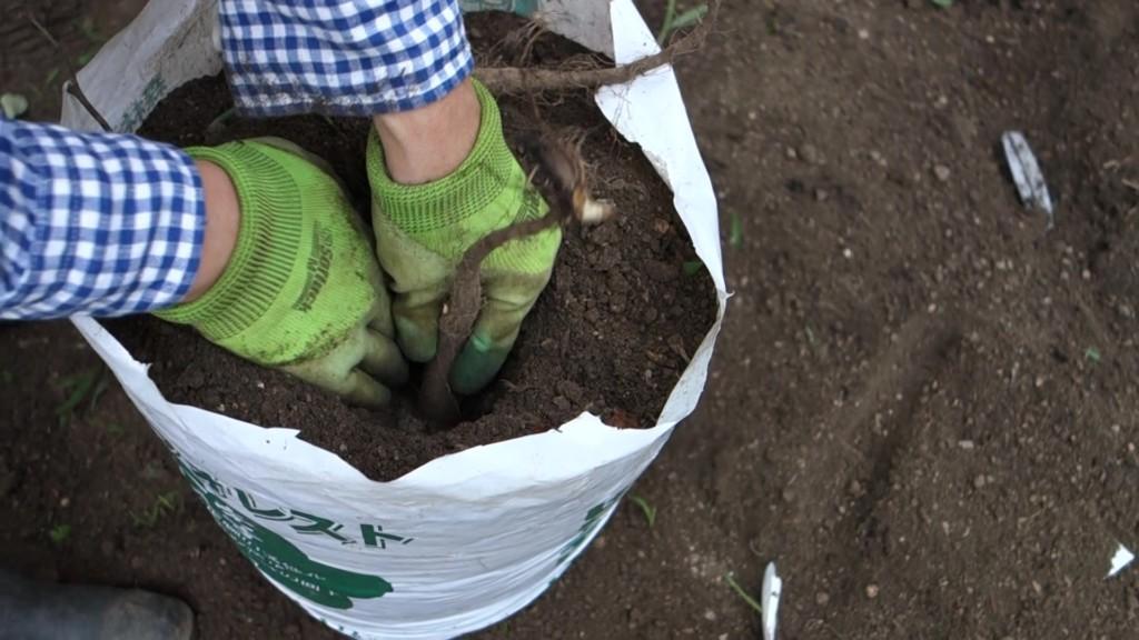 袋栽培で縦に土を入れ込んでいる様子