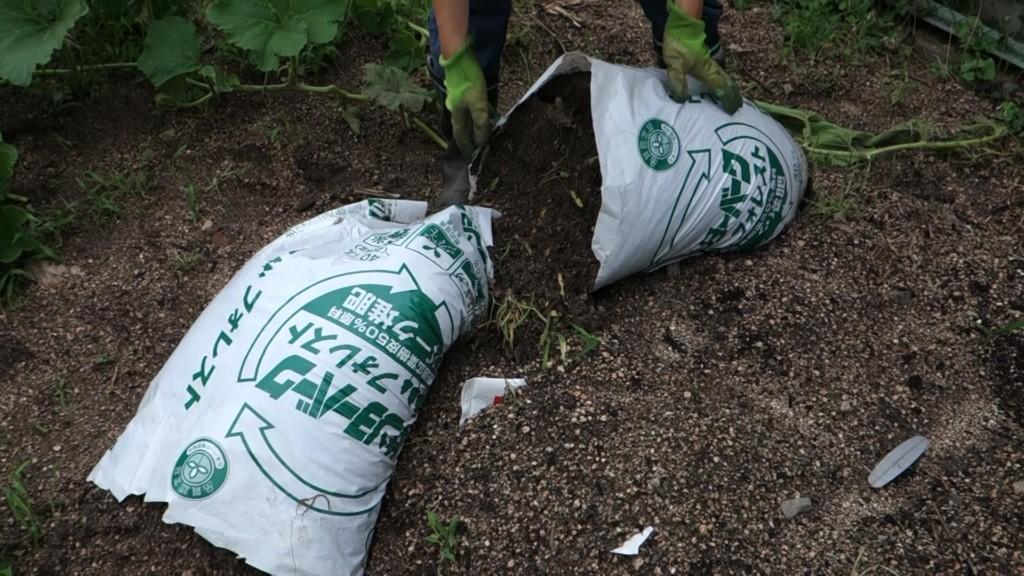 袋栽培の袋が倒れた状態