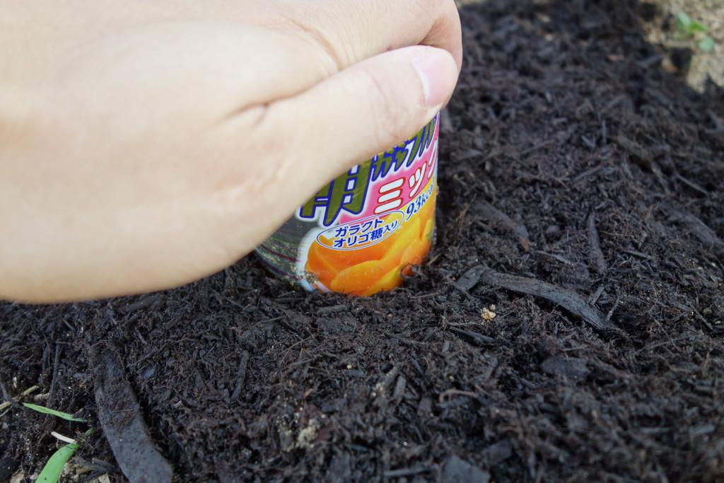 空芯菜の種まきで植穴をあけている