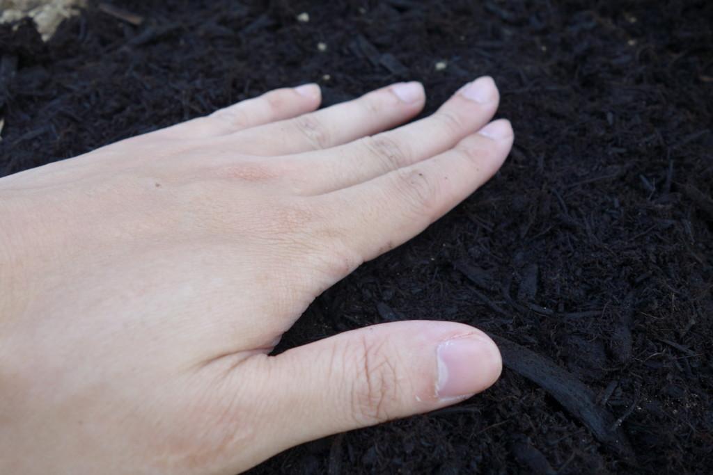 空心菜の種まきで軽く手で押さえている様子