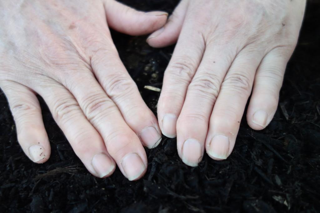ツルムラサキの直まきをして、土をかけたところ