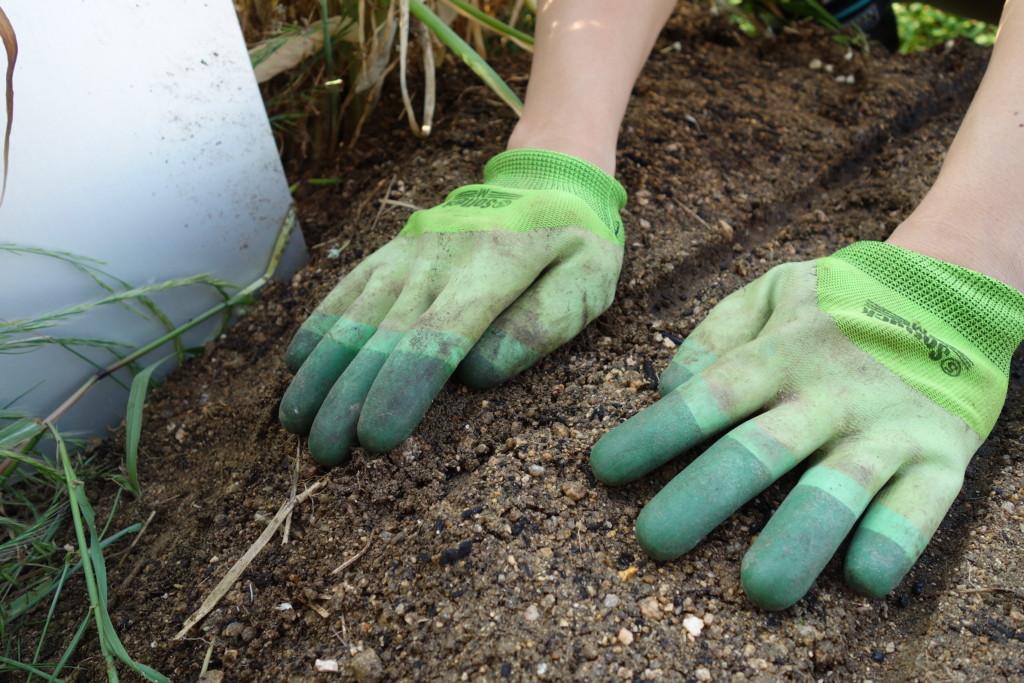種まき後の覆土