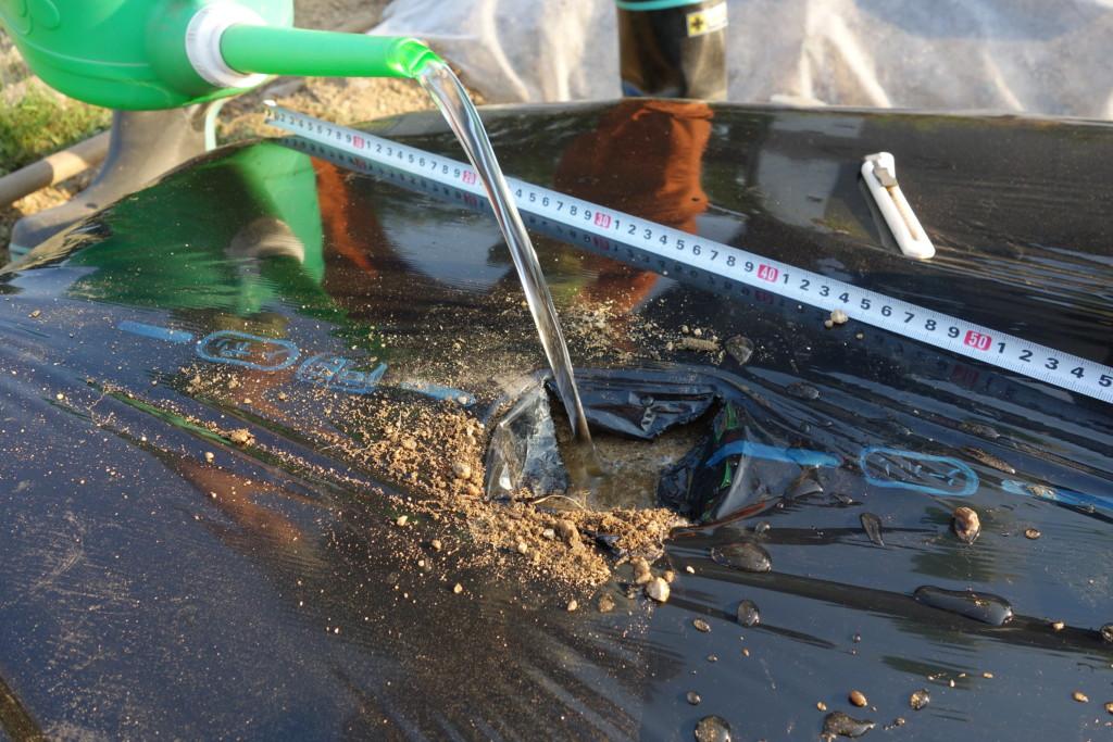 ズッキーニの植え付けで水入れしている
