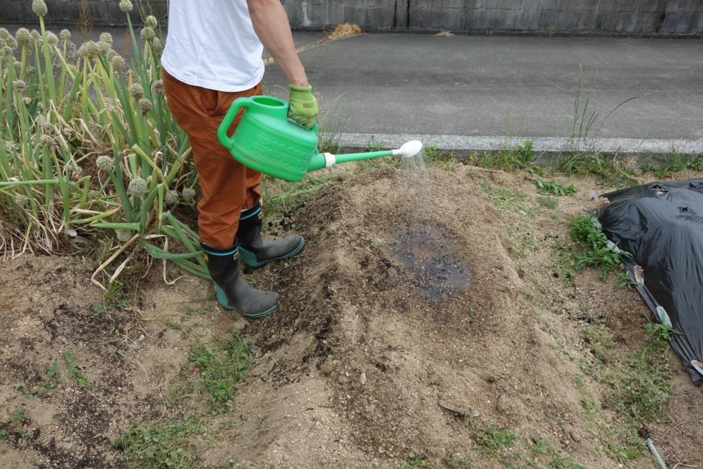 畝に水を撒いている様子