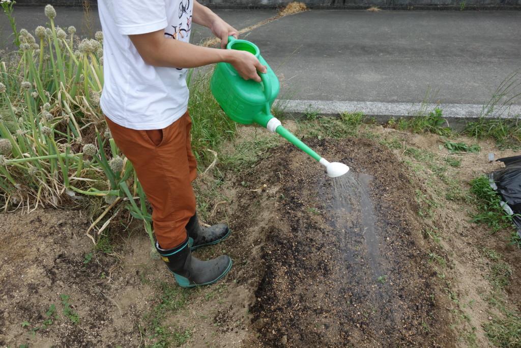 ごまの種まきの最後、水やりをしている様子