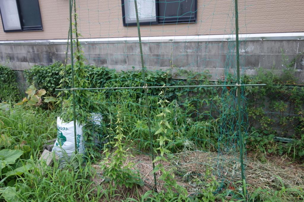 山芋栽培の特徴