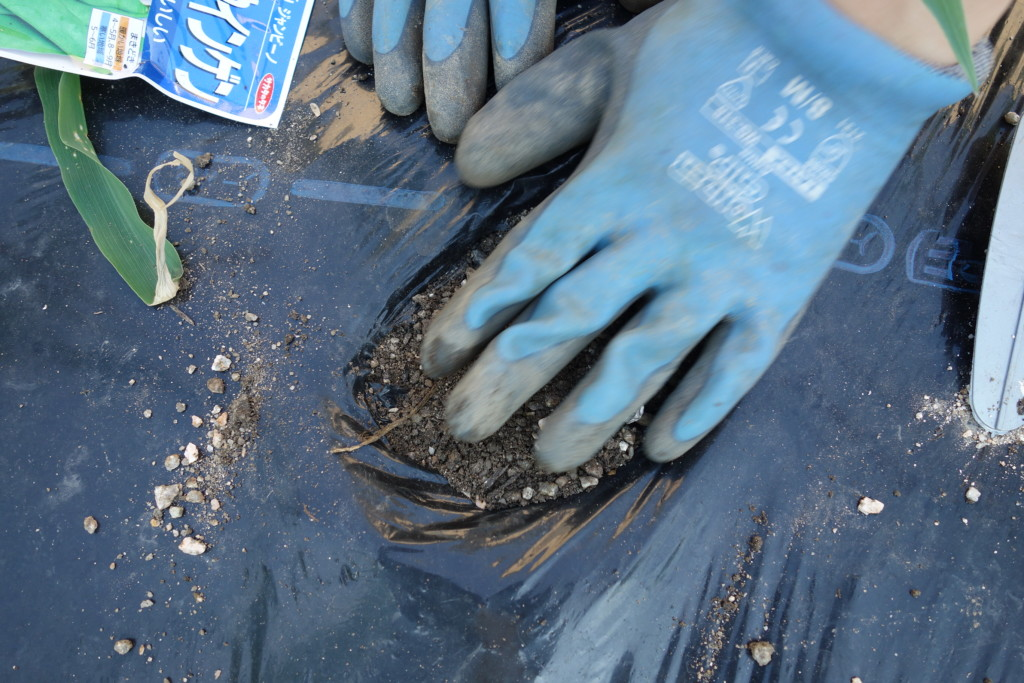 インゲンの種まきを土をかけて覆土している様子