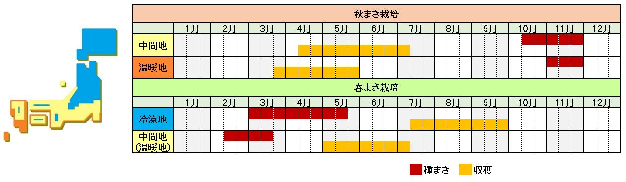 エンドウ栽培時期横