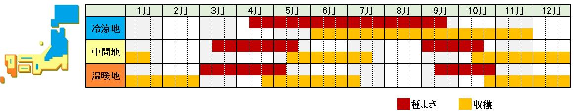 カブの栽培時期横