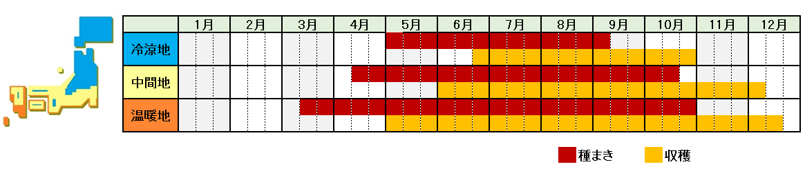 チンゲンサイ栽培時期横