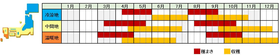 春菊の栽培時期横