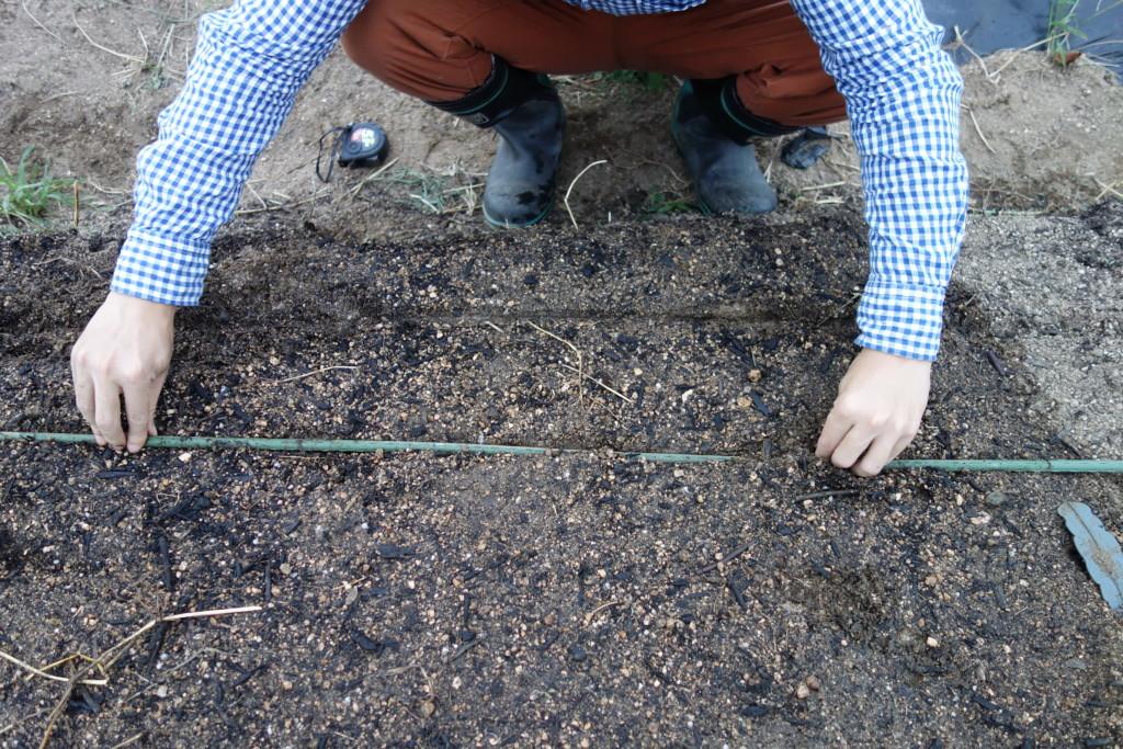 高菜の種まきで、支柱を使い溝をつけている様子