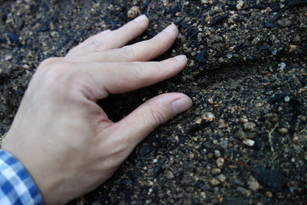 高菜の種を埋めていく様子
