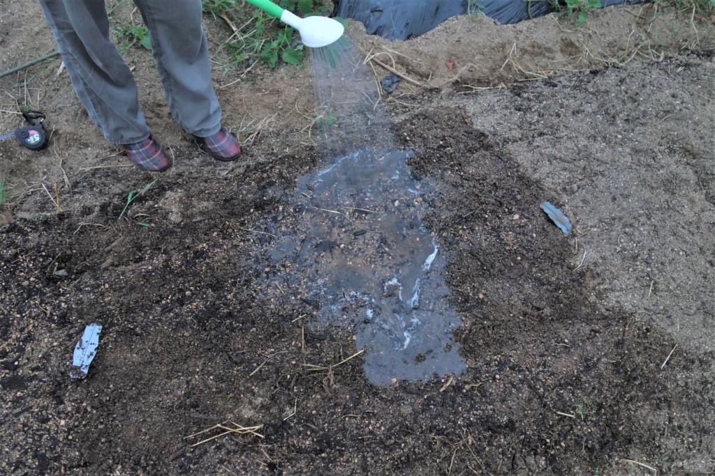 高菜の種まきが終わり、水やりをしている様子