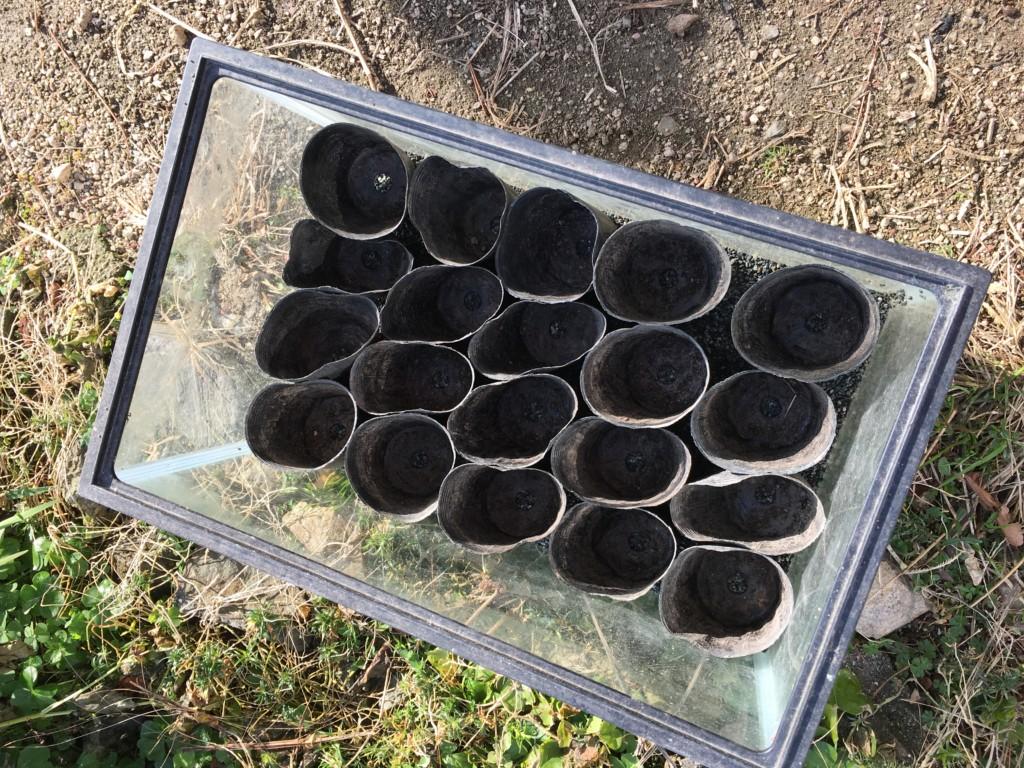 ベビーリーフの実験用の水槽とポット