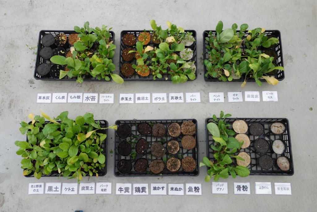 小松菜28種類の土比較結果