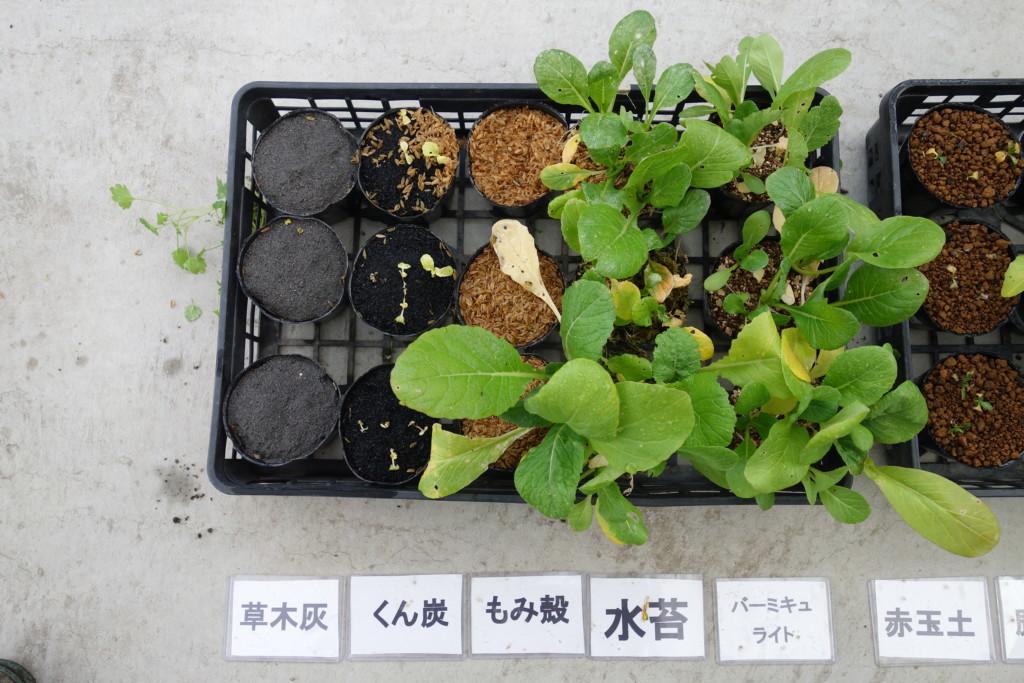 小松菜栽培比較結果1