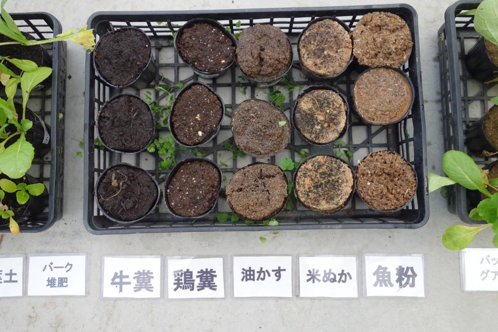 小松菜栽培比較結果5