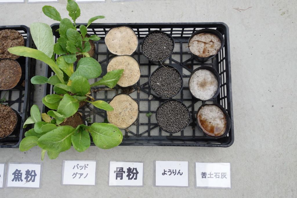 小松菜栽培比較結果6