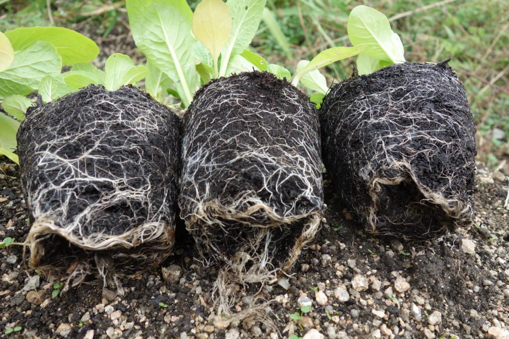 バーク堆肥の根