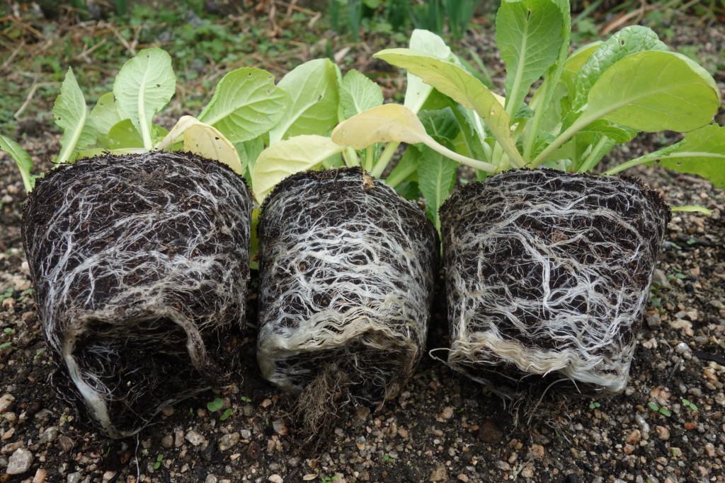 花と野菜の土の根