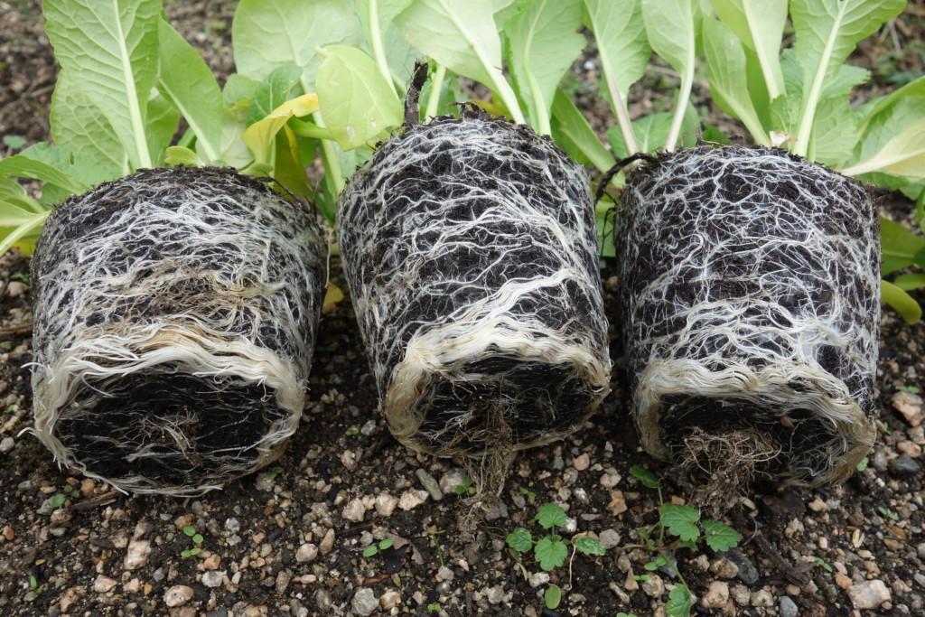 腐葉土の根