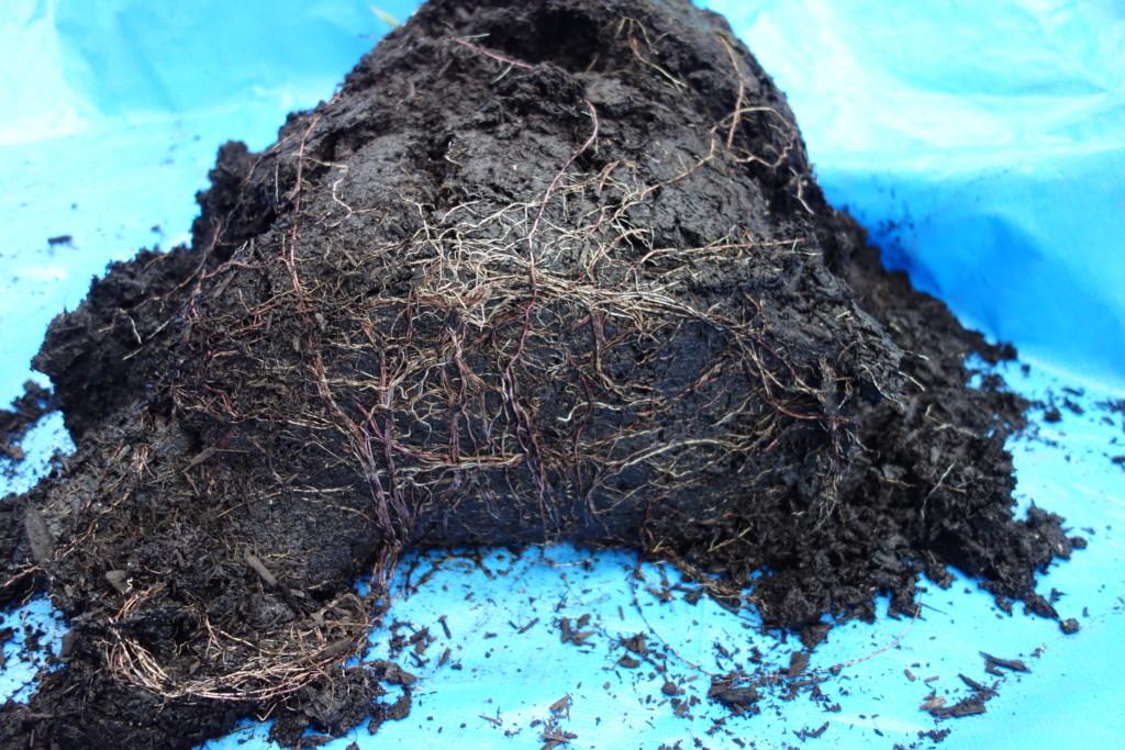 バーク堆肥底