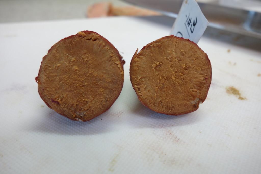 鹿沼土サツマイモの腐敗断面図②
