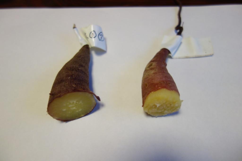 赤玉土(左)と花と野菜の土(右)とを比べた画像