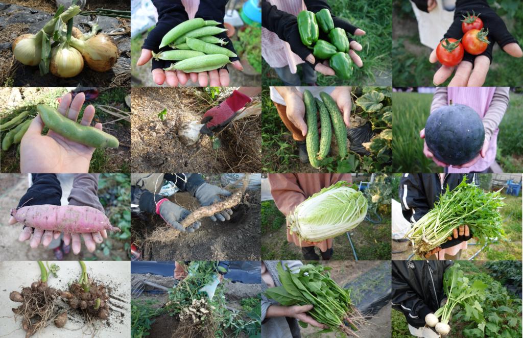 春夏秋冬野菜収穫
