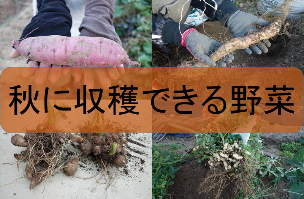 秋に収穫できる野菜