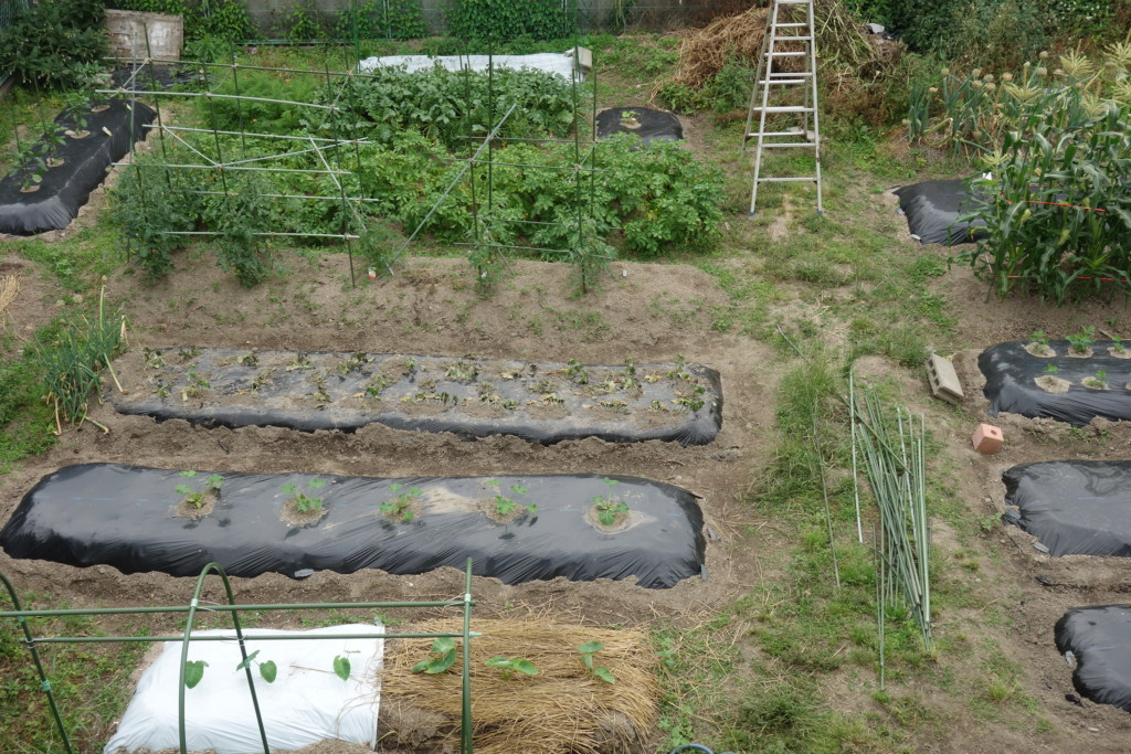 市民農園の畑