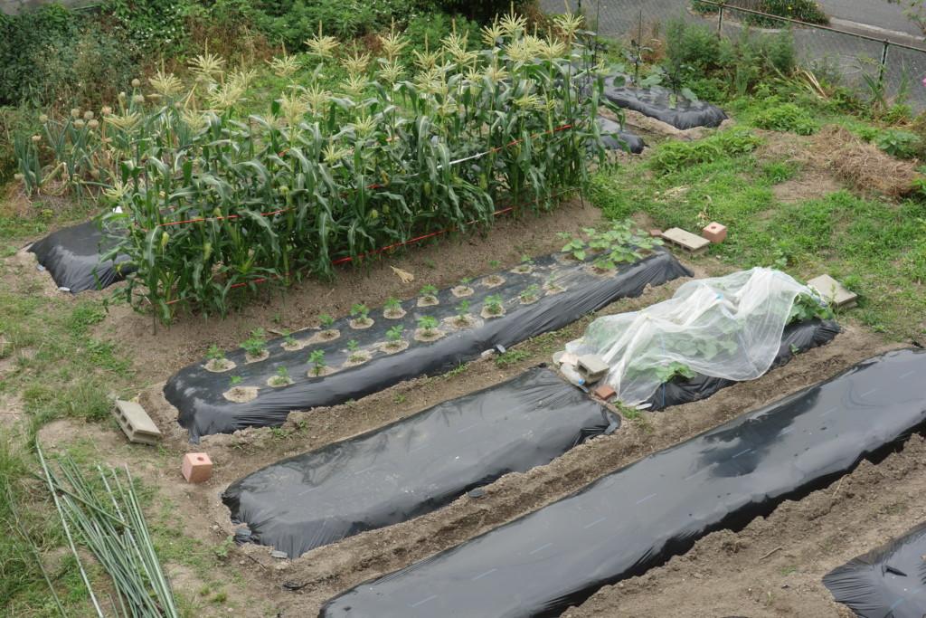 市民農園一部